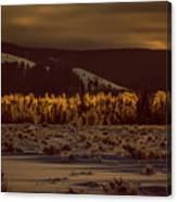 Hoar Frost In Dawn's Light Canvas Print