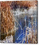Hoar Frost On Reeds Canvas Print
