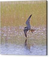 Hobby Skimming Water Canvas Print
