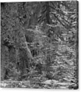 Hoh Rain Forest 3369 Canvas Print