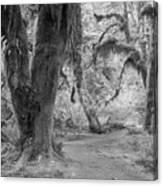 Hoh Rain Forest 3378 Canvas Print