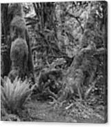 Hoh Rain Forest 3389 Canvas Print