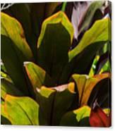 Hojas Verdes Y Rojas Canvas Print