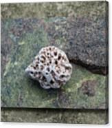 Holey Stone 2 Canvas Print