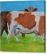 Holstein Friesian Cow And Brown Cow Canvas Print