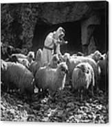 Holy Land: Shepherd, C1910 Canvas Print
