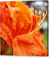 Home Decor Orange Rhodie Flower Art Print Baslee Troutman Canvas Print