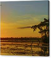 Home Home On The Swamp Canvas Print