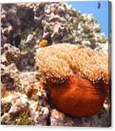 Home Of The Clown Fish 4 Canvas Print