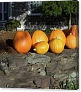 Homegrown Pumpkins Canvas Print