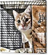 Homeless Cat Canvas Print