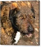 Homeless Dog Charlick Canvas Print