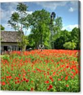 Homestead In The Poppies Canvas Print