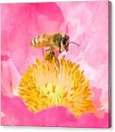 Honey Bee Collecting Pollen Canvas Print