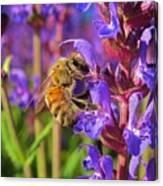 Honey Bee I Canvas Print