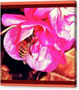 Honey Bee In A Pink Flower Canvas Print