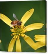 Honey Bee Mine Canvas Print
