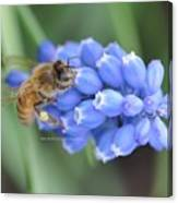 Honey Bee On Blue Flowers Canvas Print