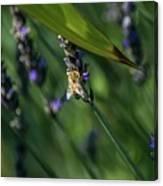 Honey Bee On Flower #4 Canvas Print