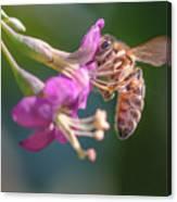 Honey Bee On Goji Berry Flower Canvas Print