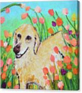 Honey In The Flower Fields Canvas Print
