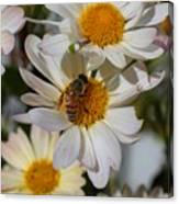 Honeybee And Daisy Mums Canvas Print