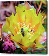 Honeybee At Work Canvas Print