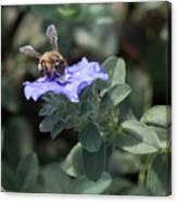 Honeybee On Blue Daze Canvas Print