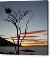 Honeymoon Bay - Tasmania Canvas Print
