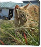 Honeysuckle Cat Hunting Canvas Print