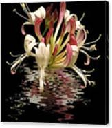 Honeysuckle Reflections Vertical Canvas Print