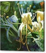 Honeysuckle Sun Canvas Print