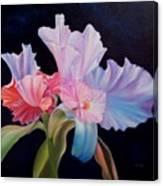 Honney Orquid Canvas Print