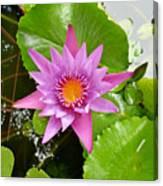 Honolulu Water Lily Canvas Print