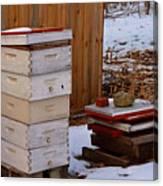 Hony Hibernation Canvas Print