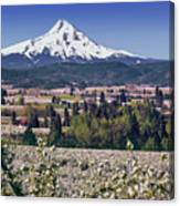 Hood River Orchards Canvas Print