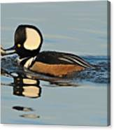Hooded Merganser And Eel Canvas Print