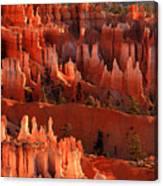 Hoodoos Of Sunset Point At Sunrise  In Bryce Canyon Canvas Print