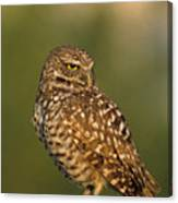 Hoot A Burrowing Owl Portrait Canvas Print