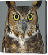 Hoot-owl - I'm Looking At You Canvas Print