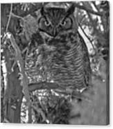Hootie Owl  Canvas Print