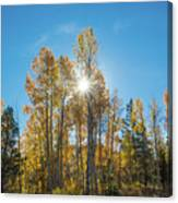 Hope For Fall  Canvas Print