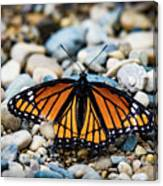 Hope Of The Monarch Butterfly Canvas Print