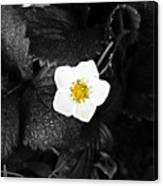Hope Tucked Away In The Petals  Canvas Print