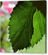 Hops Leaves Canvas Print
