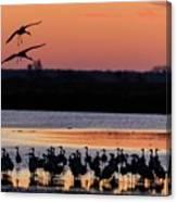 Horicon Marsh Cranes #5 Canvas Print