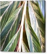 Horizon Of Palm Canvas Print