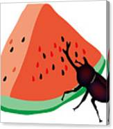 Horn Beetle Is Eating A Piece Of Red Watermelon Canvas Print