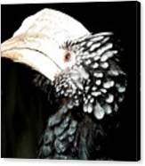 Hornbill Bird Canvas Print