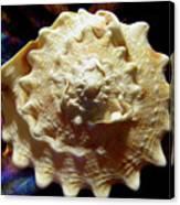 Horned Helmet Shell Top Logarithmic Spiral Canvas Print